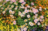 Blumenbeet (0447)