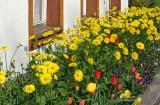 Blumenbeet (00790)