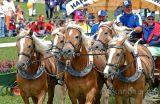 Der Kanton Zug am Marché-Concours 2006 in Saignelégier