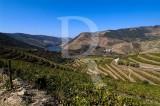 Valença do Douro