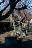 Jardim de Fanadia