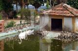 Os Cisnes do Castelo
