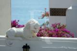 The Sad White Lion