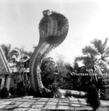 The original giant Cobra statue at the Miami Serpentarium
