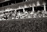 1939 - horse racing fans at Hialeah Park