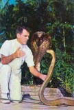 Bill Haast and a cobra at the Miami Serpentarium