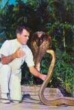 Bill Haast and a cobra at the Miami Serpentarium