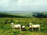 Dorset 1988.jpg