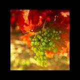 Autumn in La Rioja