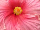 Longwood Gardens, PA, Canon S90 -- June 2010