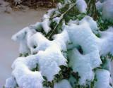 Blue Ridge Georgia Snow 01.10.11
