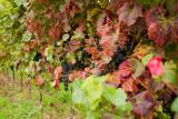 Orchard - Vineyard