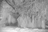 Ice In The River Derwent