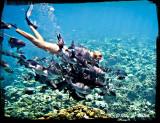 Jamaica and Grand Cayman Islands