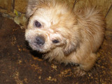 WE HAVE TO STOP PUPPY MILLS!