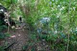 n6913 Path to Eco-Resort