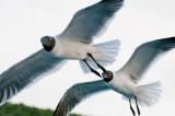 n6787 The Birds...