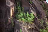 Rock Garden II