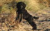 Roxie på stranden