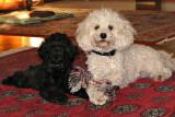 Roxie & Ginny