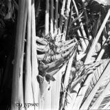 marina palm fronds