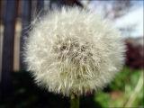 A pretty weed