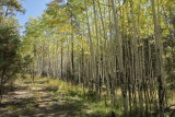 East Fork -- A Walk in the Aspens