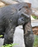 Seattle Woodland Zoo - 8/15/2008