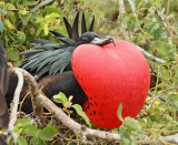 Galapagos Islands Vacation -- May 2010