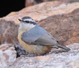 Birds -- January 2011