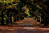 Dorrigo Driveway