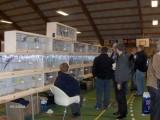 Fuglemarked i Assentoft