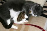 Mulle og Findus ( hun er desværre død )