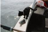 Lassie på fisketur.j