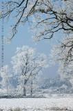 Mastbos winter scenes
