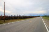 Burned forests