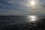 Kenai beach