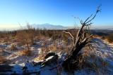 Winter afternoon III