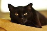 Tales of Sheba, the three-legged kitty