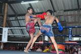 These Muay Thai boxing shows aren't the real thing...