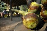 ... near Banteay Srey.