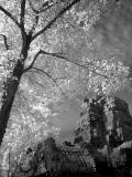 ...b&w infrared images...