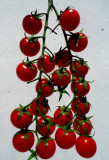 Red tomatoes - Natural Composition