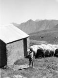 Le petit berger, son baton et ses moutons