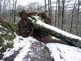 Après la tempête du 24 janvier 2009 : forêt d'Escot