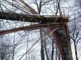Tronc d'arbre éclaté