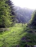 00 A l'orée du Parc National dans la Vallée d'Ossau