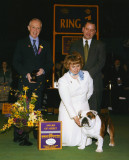 Westminster Kennel Club 2008 - First Award of Merit