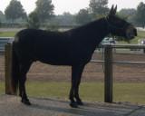 jh talking at ky horse park.jpg