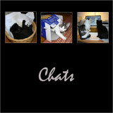 Chats - Cats